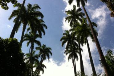 rio-jardinbotanique-parquelage-1